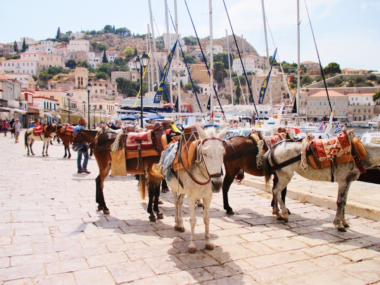Hydra Greece Donkey