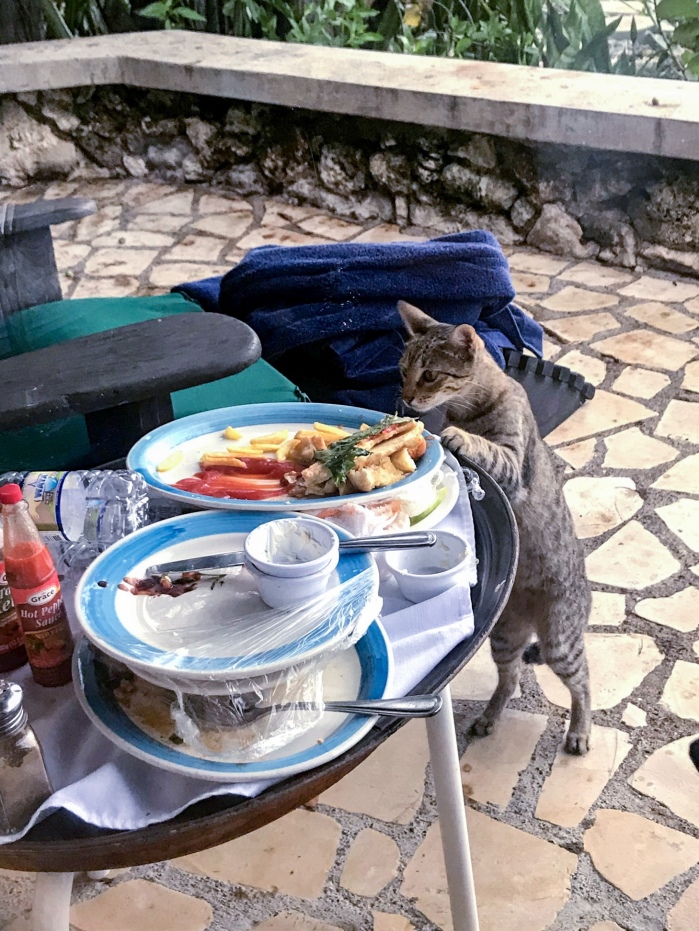 stray cat at the Rockhouse eating leftover room service